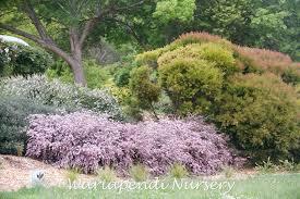 australian native garden plants garden design native plant and revegetation specialists