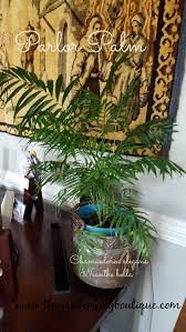 29 best houseplants and indoor gardens images on pinterest