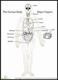 human body diagram worksheet education com