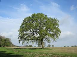 same tree different seasons miss chipie