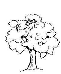 trees leaves coloring pages 8 beauty