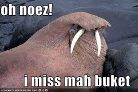 Walrus Meme - oh noez i haz a buckit pinterest