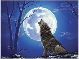 lone wolf by jeff wilkie grey wolf howling at the moon 300
