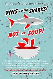 88 best saving sharks images on pinterest shark week ocean life