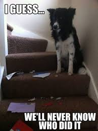 Funny Memes Animals - 30 funny animal captions part 2 30 pics i love funny animal