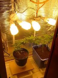 cfl grow closet setup roselawnlutheran