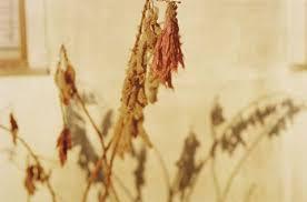 Dry Flowers Untitled Dry Flowers By William Eggleston On Artnet
