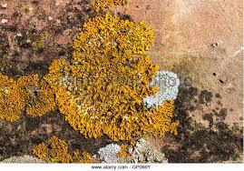 rust fungi stock photos u0026 rust fungi stock images alamy