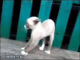 Scared Cat Meme - scared cat meme guy
