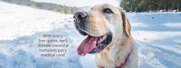 Pet Healthy Paws Pet Insurance Home Facebook