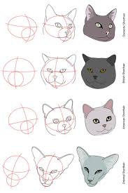 best 25 cat anatomy ideas on pinterest cat drawing tutorial