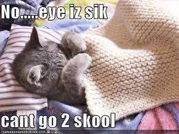 Silly Cat Memes - funny cat memes best cute kitten meme and pictures