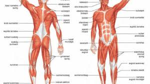 diagram of muscular system label muscles worksheet body muscles