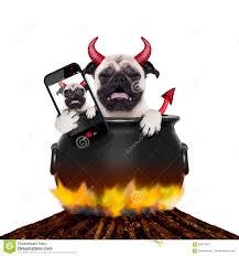 pet halloween background halloween selfie dog stock photo image 59941997