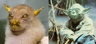Yoda Returns Star Wars Darling Spotted Nature Side