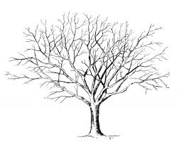 pencil sketch of tree without leaves tree drawing dr odd