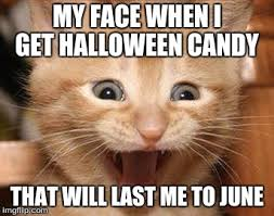 Halloween Cat Meme - excited cat meme imgflip