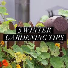 28 winter gardening tips winter garden tips organic