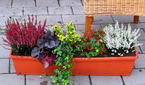 balkon grã npflanzen balkonpflanzen set pflanzen versand harro s pflanzenwelt kaufen