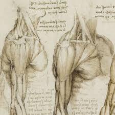 leonardo da vinci anatomist