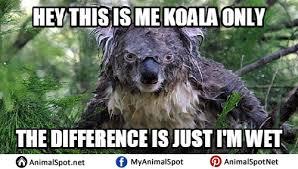 Wet Meme - wet koala memes different types of funny animal memes