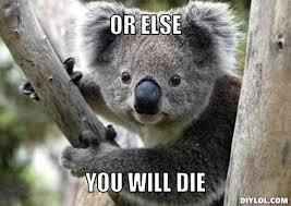 Angry Koala Meme - koala memes google search funny stuff pinterest animal