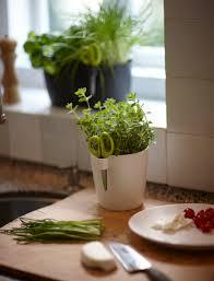 Kitchen Herb Pots Brussels Herbs Pots