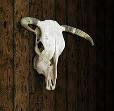 cow skull digital art by james larkin