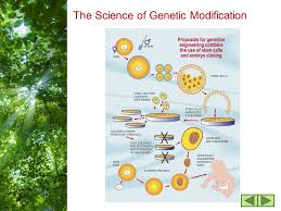 free powerpoint templates page 1 genetic engineering ppt download