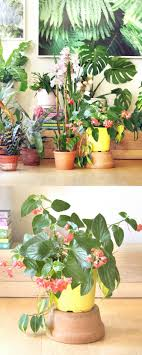 best indoor house plants 18 most beautiful indoor plants 5 easy care tips a piece of