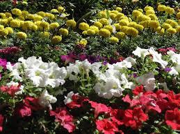design green india u2013 best tips on growing plants u0026 vegetables at home
