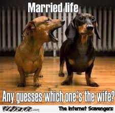 Wife Memes - guess which one s the wife funny meme pmslweb