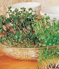 vegetable seeds u0026 plants tomato pepper bean organic heirloom
