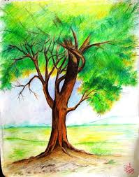 trees and foliages study in watercolour pencils wetcanvas