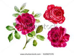 vintage roses set watercolor illustration design stock