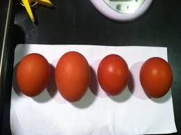 can pullets lay inconsistent size eggs backyard chickens