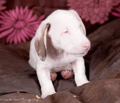 Sponsor A Puppy For The Blind Sponsor A Kitten Puppy Or Special Need