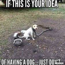 Dog Lover Meme - this is your idea of having a dog just don t