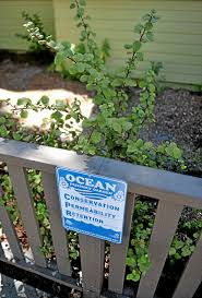 california native plant garden long beach couple conserves water with native landscaping