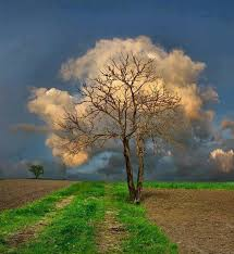 white fluffy tree an optical illusion