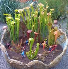 Container Water Gardens Black Gold Garden Water Features And Carnivorous Plants Black Gold