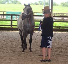 appaloosa horse club uk archives red heart appaloosas