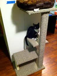 Outdoor Cat Condo Plans by How To Build A Diy Cat Tree How Tos Diy