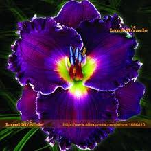 Purple Lillies Popular Dark Purple Lilies Buy Cheap Dark Purple Lilies Lots From