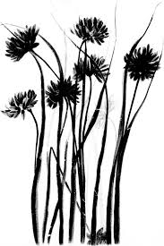 file wild flowers of the pacific coast microform from original