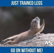 Sexy Legs Meme - 77 best leg day images on pinterest gym humor workout humor