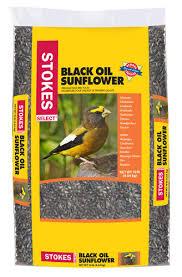 stokes select black oil sunflower wild bird food 10 lb at menards
