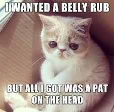 Cat Problems Meme - first world cat problems album on imgur