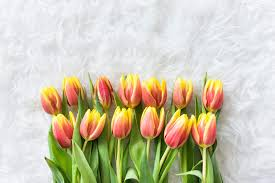 free flowers 80 free flowers stock photos and hd wallpapers picjumbo