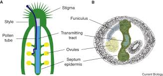 Where Is The Pollen Produced In A Flower - the formation and function of the female reproductive tract in